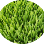 blendea-supergreens-moje-hodnotenie