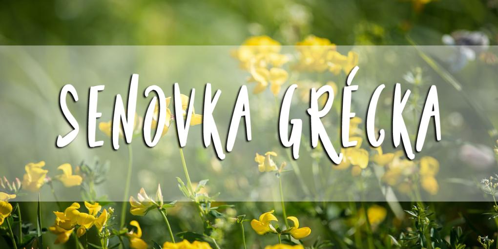 senovka-grecka-hodnotenie